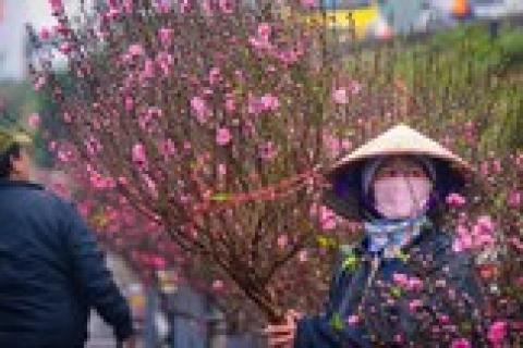 Nhiều chợ hoa dịp Tết sẽ được phục vụ Wi-Fi miễn phí